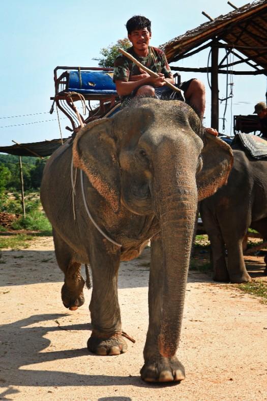 Elefant_IMG_8331_2