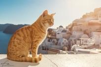 Oia_Santorini_Cat_1318