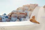 Oia_Santorini_Cat_969