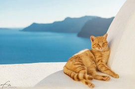 Oia_Santorini_Cat_972