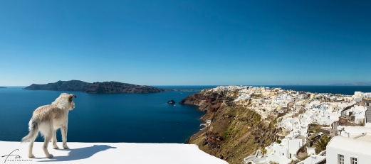 Oia_Santorini_Dog_Panorama
